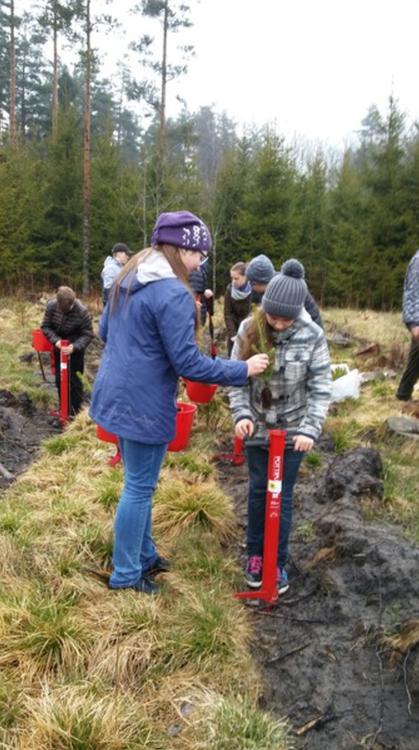 Foto: koku (egļu) iestādīšanas akcija Olaines apkārtnēs